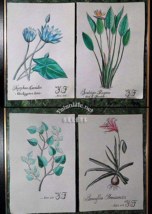 Taipei Life Art Watercolour Flowers Romanticism  Yalan雅岚文艺博客